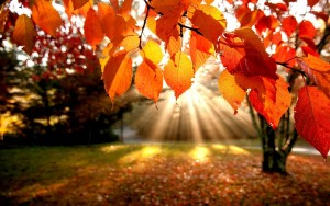 fall-leaves-wallpapers-for-desktop